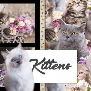 Kittens - Coming November